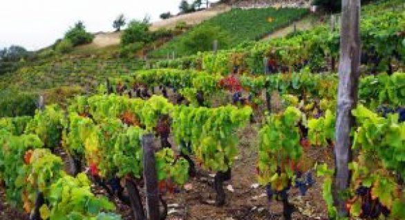 Tradición y calidad, el secreto de los vinos de la bodega Monasterio de Corias